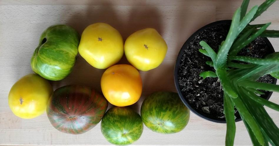Organski paradajz u različitim bojama